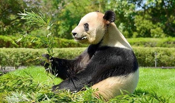 パンダのデザインが入った名刺